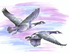 Web geese