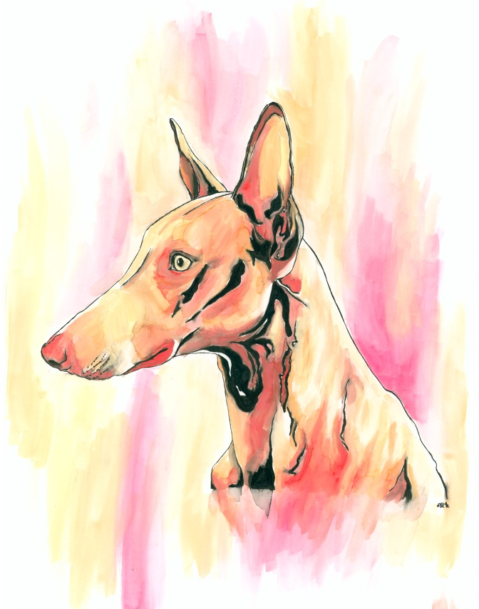 Ibizan Hound Watercolor and Ink